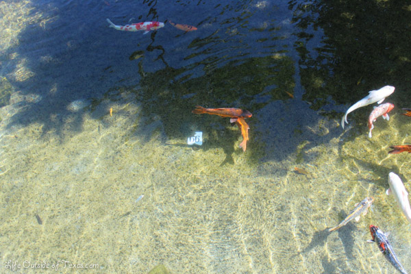 Grand Hyatt Kauai koi pond