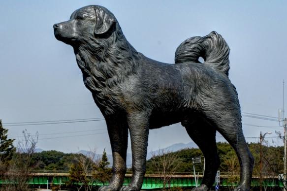Osu Dog Park