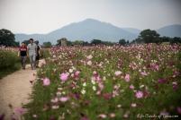Summer Flowers in Gyeongju, South Korea