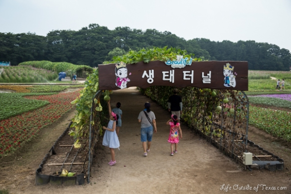 Gourd Tunnels in Gyeongju, South Korea