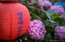 Taejongsa Hydrangea Festival in Busan
